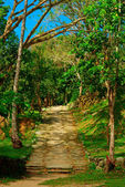 Stone Stairs amidst Lush Vegetation — Stock Photo