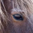 Eye of a horse. — Stock Photo