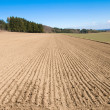 Stock Photo: Arable land and forest.