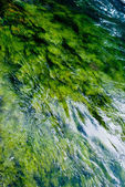 Green Algae River — Stock Photo