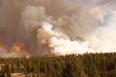 Zuřící lesní požár — Stock fotografie