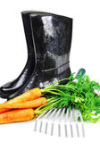 Carrot and gardening tools — Stock Photo