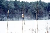 Pianta essiccata in neve — Foto Stock