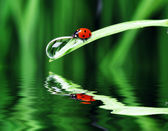 Water drop on the grass — Stock Photo