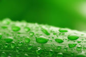 Green plant leaf with water drops — Stock Photo
