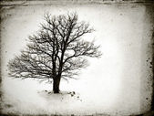 Lone tree without leaves — Stock Photo