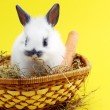 Small rabbit — Stockfoto