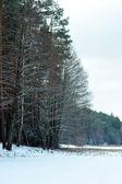 Journée d'hiver — Photo