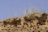 桑迪悬崖上的浅层巢 — 图库照片