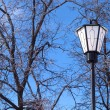 Stock fotografie: Lantern in front of frozen trees on blue sky