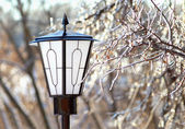 Street Lantern and frozen tree branch closeup — Stock Photo