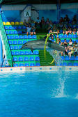Delphinarium. A dolphin. — Stock Photo