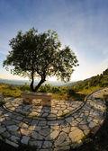 Arbre et banc en pierre — Photo