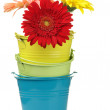 Colorful buckets with gerberas — Stock Photo #3949307