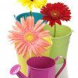 Colorful buckets, watering can and gerberas — Stock Photo #4350549