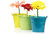 Colorful buckets with gerberas — Stock Photo
