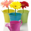 Colorful buckets, watering can and gerberas — Stock Photo
