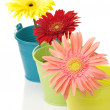 Colorful buckets with gerberas — Stock Photo #4931980