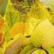 Yellow autumn background from garden leaves — Stok fotoğraf