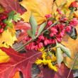 Stock Photo: Background from autumn leaves and fruits