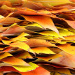 Edges of autumn leaves of a maple — Stock Photo