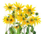 Achterzijde van gele bloemen — Stockfoto