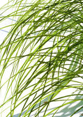 Grass in a sunlight — Stock Photo