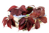 Magazines with red autumn grapes leaves — Stock Photo