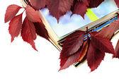 Boeken en tijdschriften met rode herfst bladeren — Stockfoto