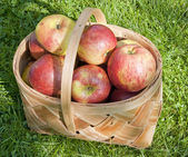 Basket of red apples on a grass on a solar glade — Stock Photo