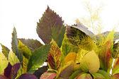 Gele herfst achtergrond van tuin bladeren — Stockfoto