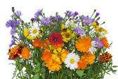 Bouquet from flowers which have lived till October. — Stock Photo