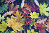 Autumn leaves in cold water — Stock Photo