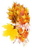Złote liście w prezencie — Zdjęcie stockowe
