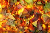 Hojas resumen antecedentes de otoño — Foto de Stock