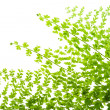 Fern leaves isolated macro postcard — 图库照片