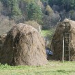 Dry grass fodder in haystacks — Stock Photo #4270873
