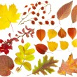 Set of design elements on a theme of autumn. — Stock Photo