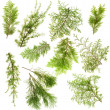 Stock Photo: Evergreen plants branches isolated set