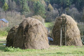 Dry grass fodder in haystacks — Stock Photo
