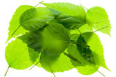 Small group a heap chaos of green leaves — Stock Photo