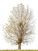 Isolated ugly curve tree without leaves — Stock Photo