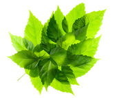Green leaf from leaves — Stock Photo