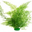 Fern bush  isolated - Foto de Stock
