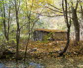 Hut of the jobless person in autumn wood — Stock Photo