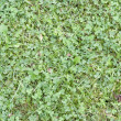 Forests uncultivated grass background — Stock Photo #5345963