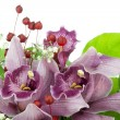Stock Photo: Orchids from wedding bouquet