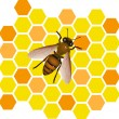 Bee vector — Stock Vector #5293253
