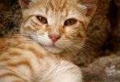 Ginger cat,Greece — Stock Photo