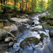 Forest river in the morning — Stock Photo
